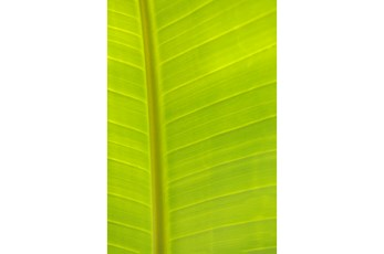 Picture-24X36 Tropical Leaf By Karyn Millet