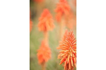 Picture-24X36 Desert Blooms By Karyn Millet