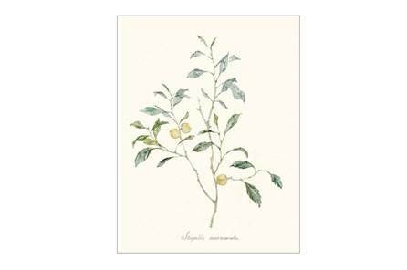 Picture-Herb Garden III