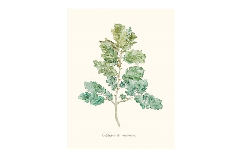 Picture-Herb Garden IV