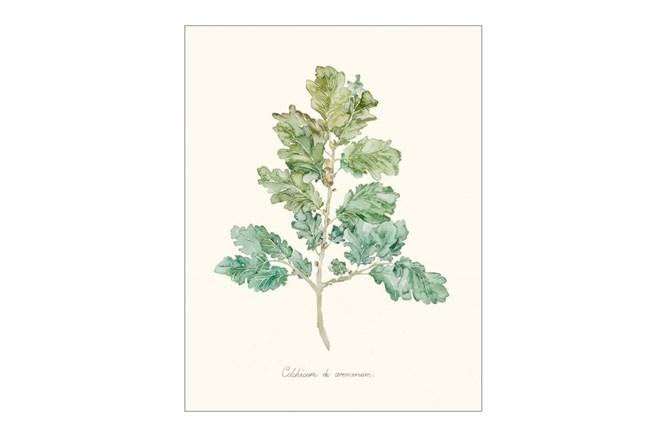 Picture-Herb Garden IV - 360