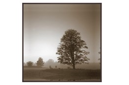 Picture-Foggy Morning