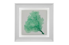 Picture-Sea Fan Emerald