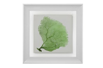 Picture-Sea Fan Green