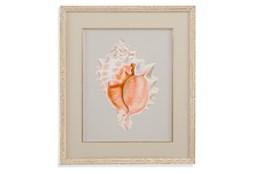 Picture-Framed Shell I