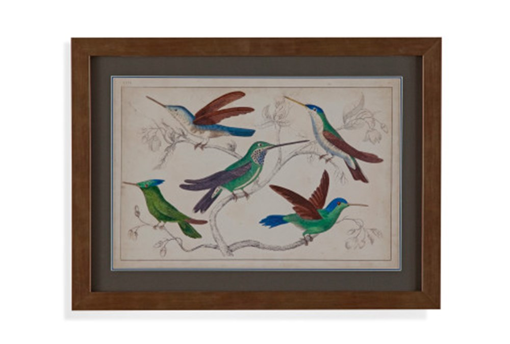 Picture-Hummingbird Group I