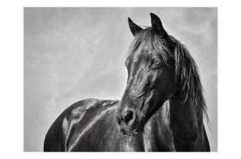 Picture-Stallion On Acrylic