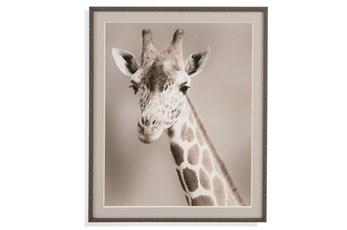 Picture-Giraffe