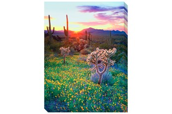 Picture-36X48 Desert Wildflowers