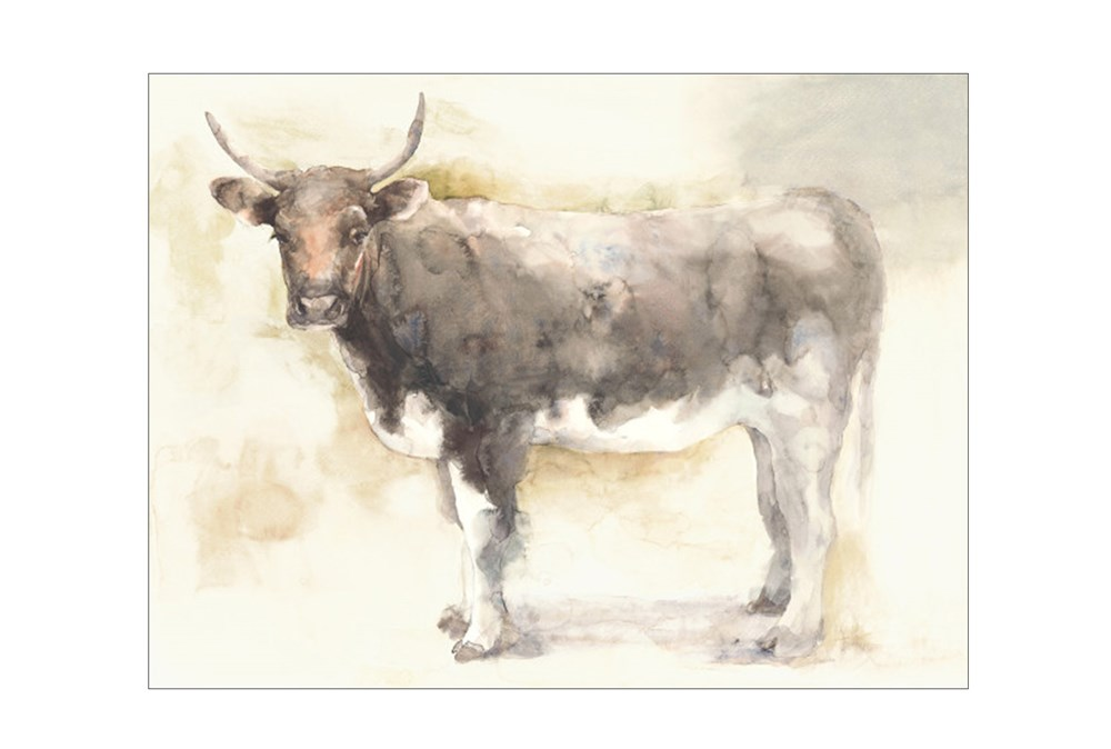 Picture-40X30 Beautiful Bovine