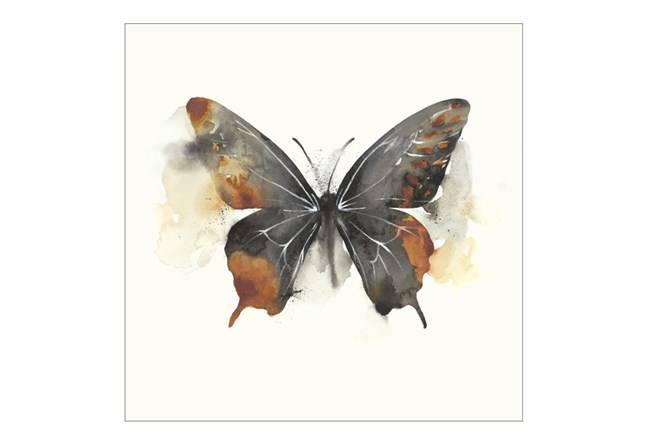 Picture-24X24 Butterfly Dance IV - 360