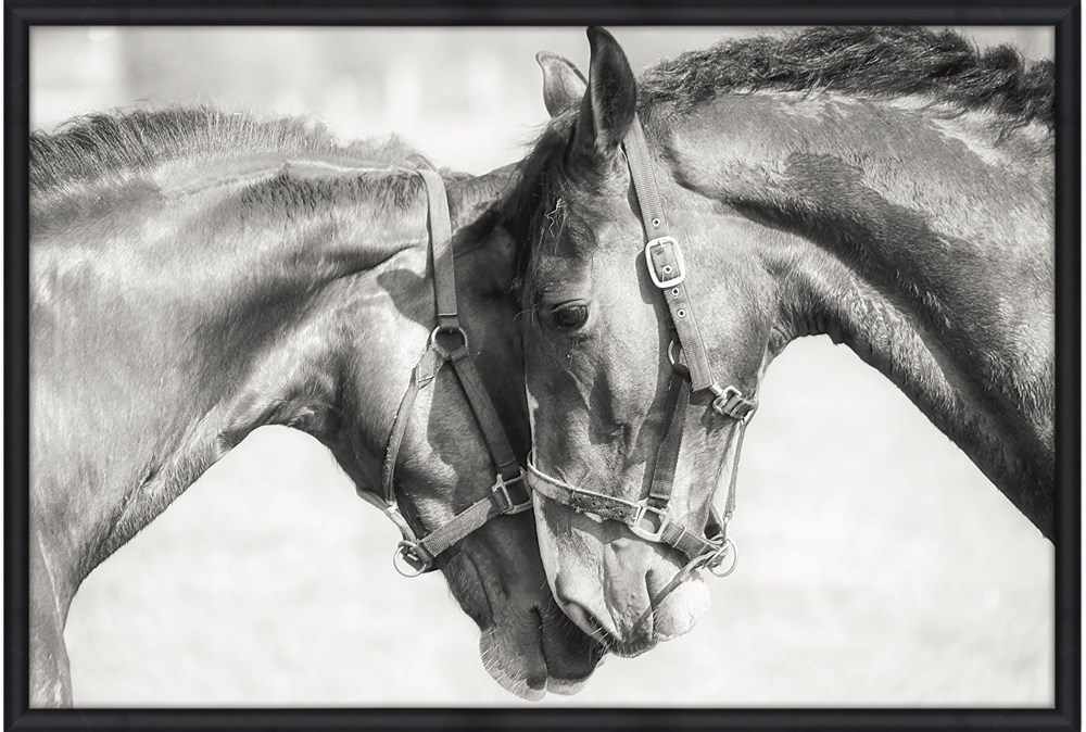 Picture-Two Horses 56X36