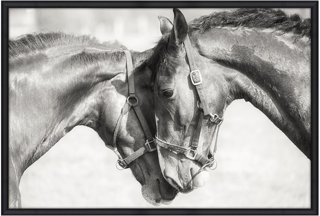 Picture-Two Horses 56X36 - 360