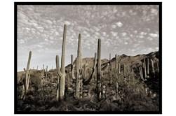 Picture-Cactus Summit I