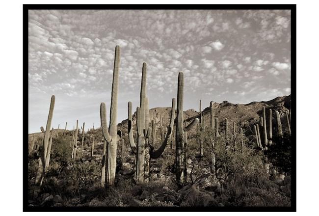 Picture-Cactus Summit I - 360