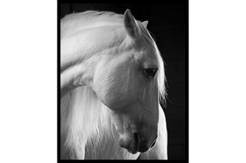 Picture-Timid White Stallion 32X42