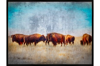 Picture-Buffalo Gathering 50X38