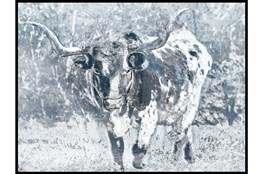 Picture-Longhorn Blue I 50X38