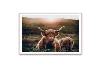 Picture-Highland Cow 60X40