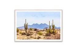 Picture-Desert Saguaro 60X40