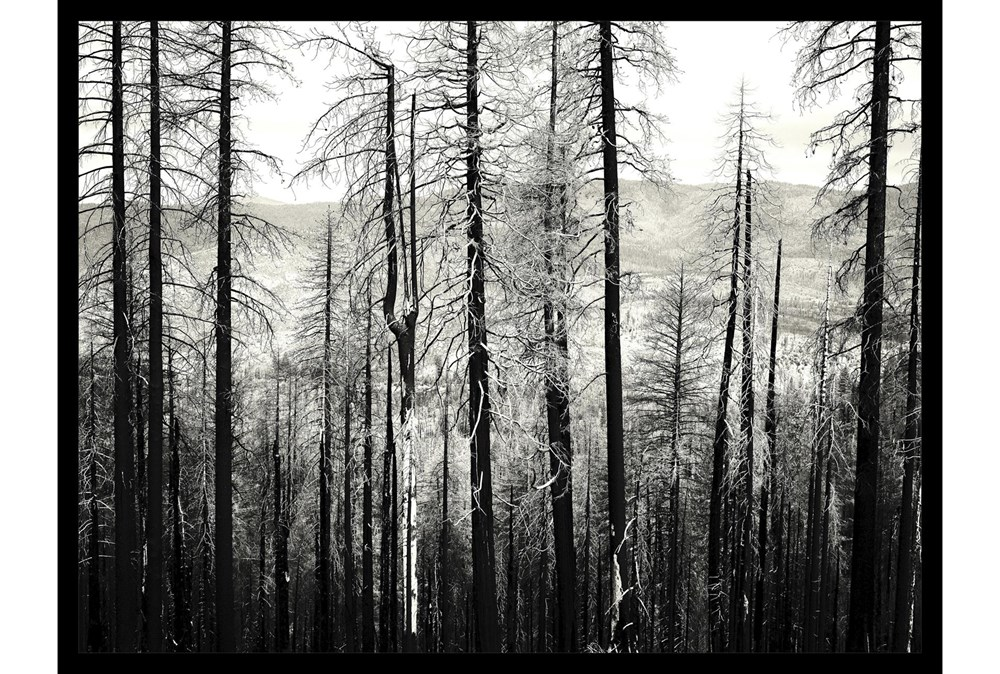 Picture-Winter Woods
