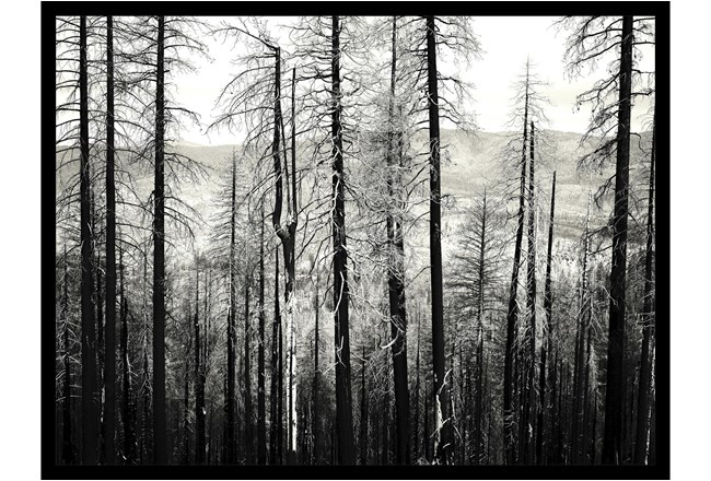 Picture-Winter Woods - 360