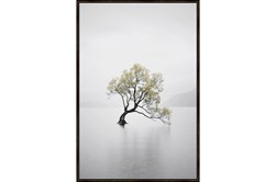 Picture-Tree In Lake
